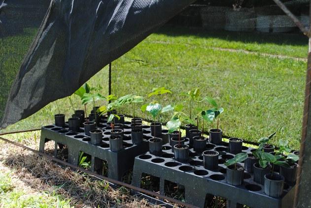 Experimento crescimento inicial