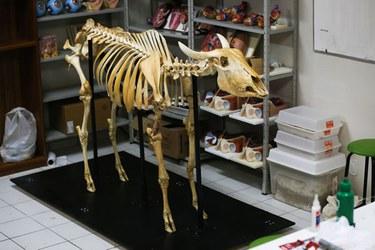 Peça anatômica produzida pelos alunos da UFAC