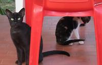 Comunicado sobre o atendimento clínico a cães e gatos