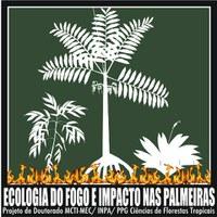 Projeto de Doutorado da Ufac investiga o impacto do fogo de superfície na comunidade de palmeiras de uma floresta tropical
