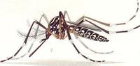 Ufac promove ação anti-zika em Cruzeiro do Sul
