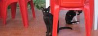 Ufac vai oferecer atendimento veterinário para cães e gatos